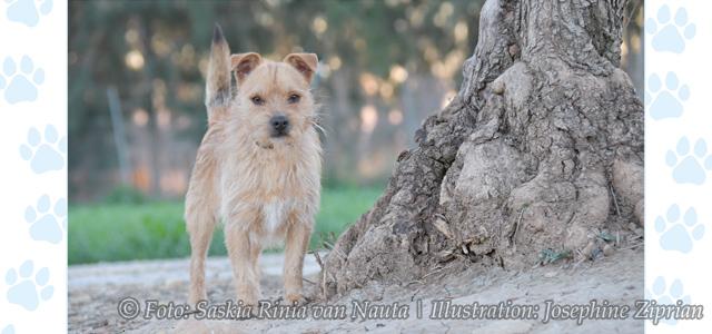 Kalender, Hunde und Illustration