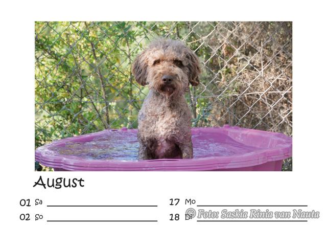 Kalender Seite Hund